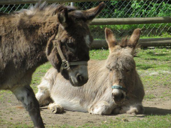 photo of donkeys